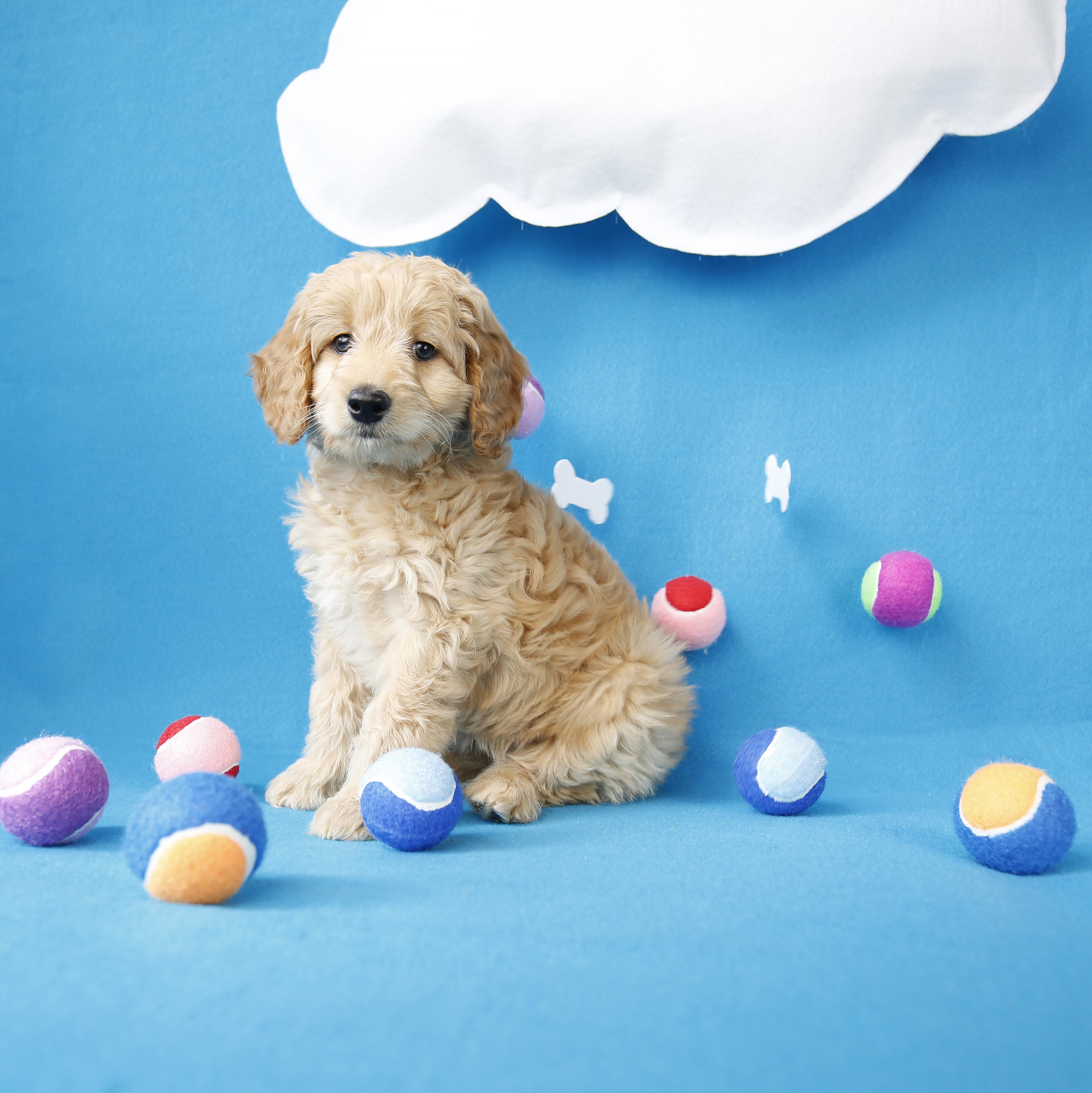 Dog+toys3