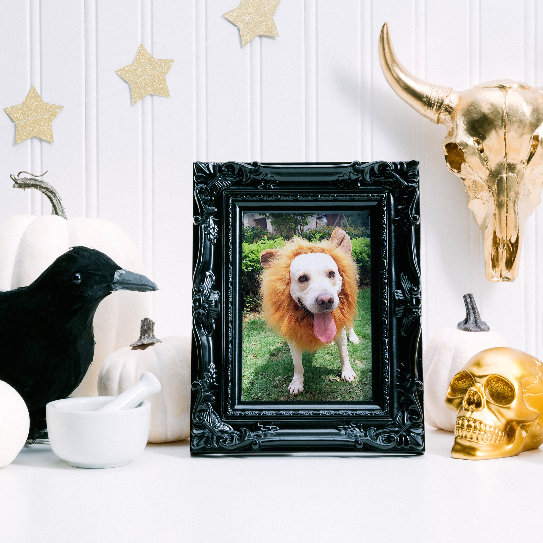 BROADSWORD_HALLOWEEN_FACEON_1x1_CHIC_COSTUMES_BLACKFRAME_LIFESTYLE_PETS_DOGS_B072JF1VGX